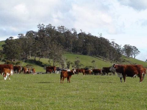 Grants for Dairy Farmers