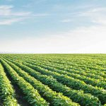 WA Grants and Loans for Farming sector